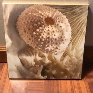 Coral photo Wall hang